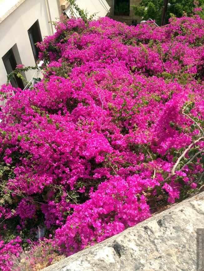 Город утопает в цветах и вьющихся растениях