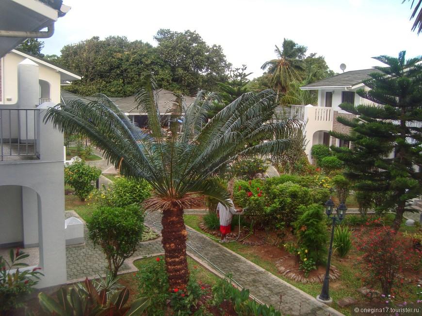 """""""А из нашего окна.."""" Справа - папйи и манго, слева - пальмы ленивые. Креол-садовник улыбался с самого раннего утра, приветствуя мою заспанную физиономию неизменным: """"Морнинг, мэм!"""""""