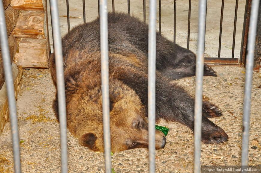 27. Также на территории есть клетка с медведем, так и не понял зачем она там, просто посреди леса стоит маленькая клетка, а в ней медведь… Какое-то издевательство.