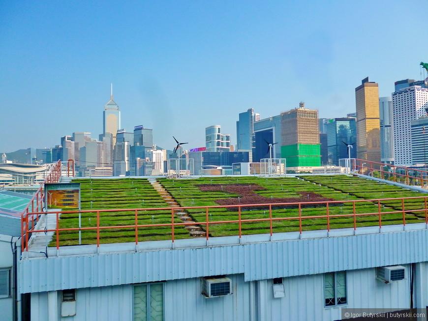 06. Мини-ферма на крыше одного из небоскрёбов города. Экономия территорий на лицо.