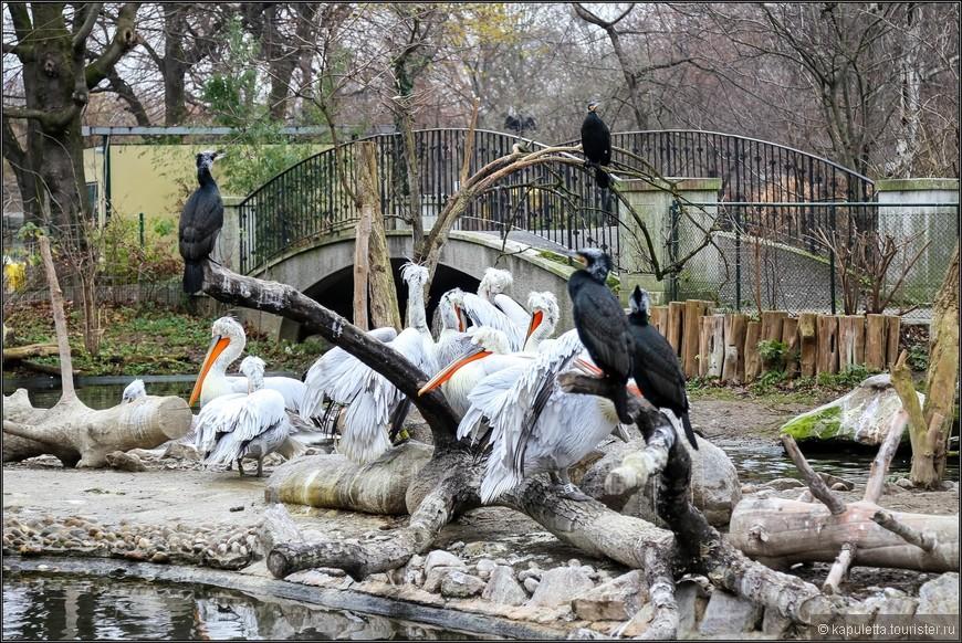 Огромная колония птиц жила своей жизнью...