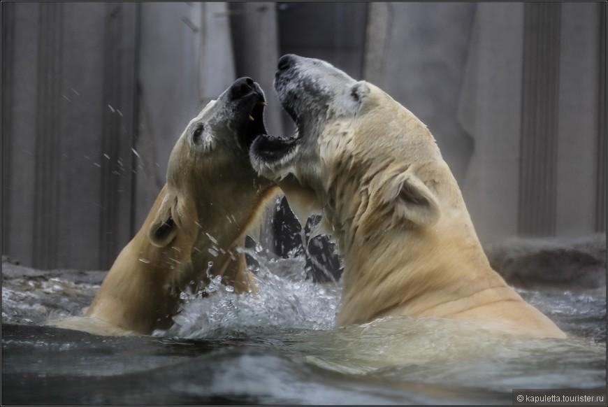С мая 2014 года в зоопарке можно снова увидеть белых медведей: новый павильон, «Земля Франца-Иосифа», занимает площадь 1 700 м² и предлагает белым великанам достаточно места для того чтобы вволю порезвиться. Впервые за медведями можно понаблюдать и во время ныряния.