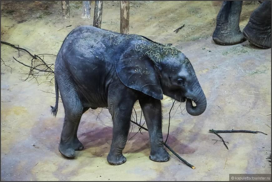 Уже в 1906 году в зоопарке Шёнбрунн произошла сенсация: впервые в мире в Вене под покровительством человека родился детёныш африканского слона.