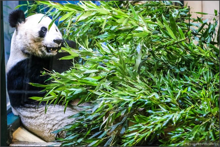 Милых плюшевых панд  можно  посмотреть только здесь или в Китае, больше ни в одном зоопарке. Семейная пара – панды Yang Yang и Long Hui – была передана Китаем «в аренду» Венскому зоопарку, и это их потомство привлекает сюда ежегодно тысячи туристов.