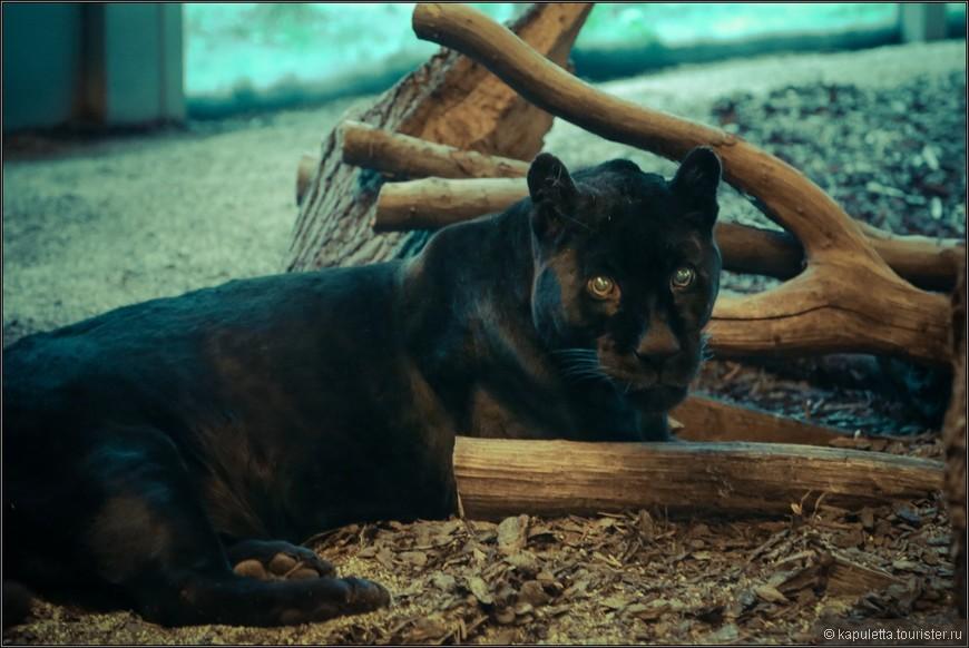 Есть в зоопарке и не очень приветливые глаза....