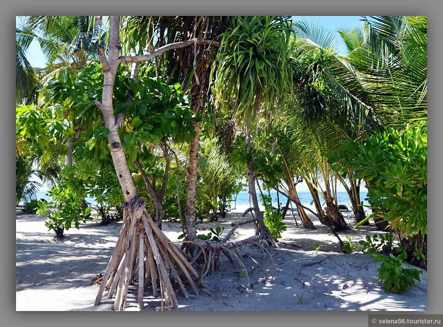 Вид с террасы на пляж .