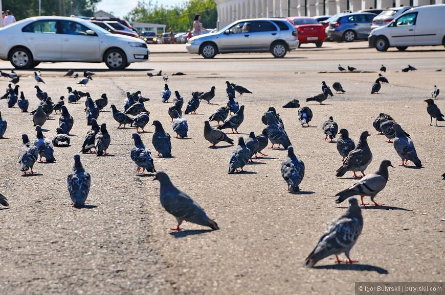 04. На площади обитают тысячи голубей, они не боятся людей, а даже наоборот, лезут на руки.