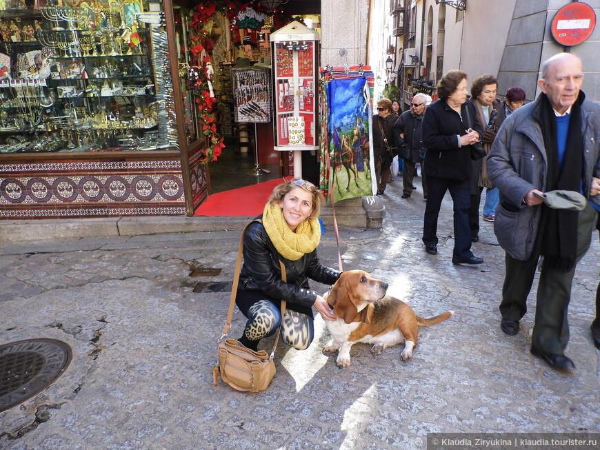 Сколько раз бывала в Испании, столько раз встречала любимых бассетов.