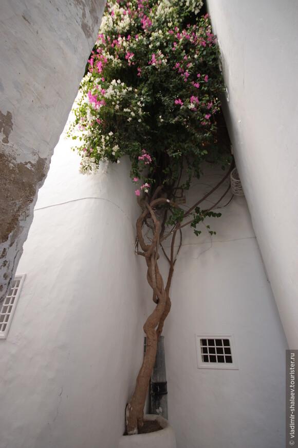 Никакой растительности в Медине, как правило, нет. Но а если уж чего то выросло, то за этим тщательно ухаживают.