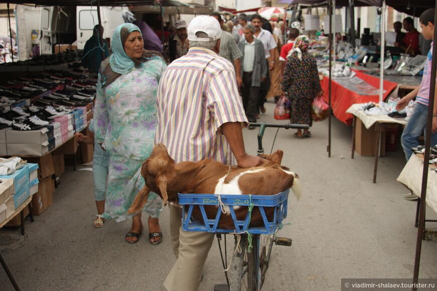 Этот тунисец с живым товаром.