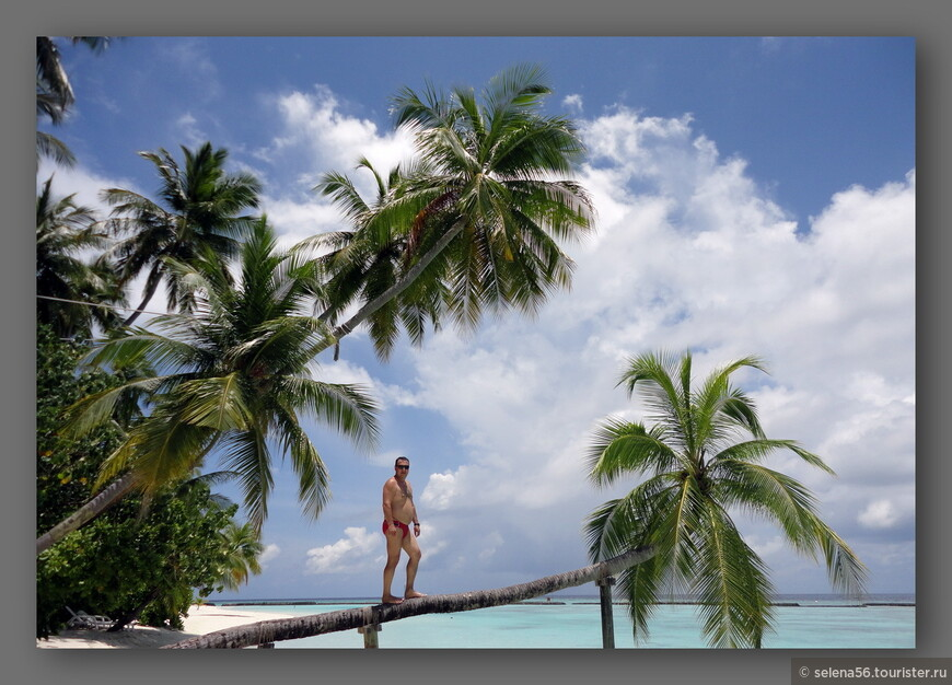 """Рядом с нашим бунгало всегда кипела жизнь .Все любили фотографироваться на фоне пальмы из рекламы """"Баунти""""."""