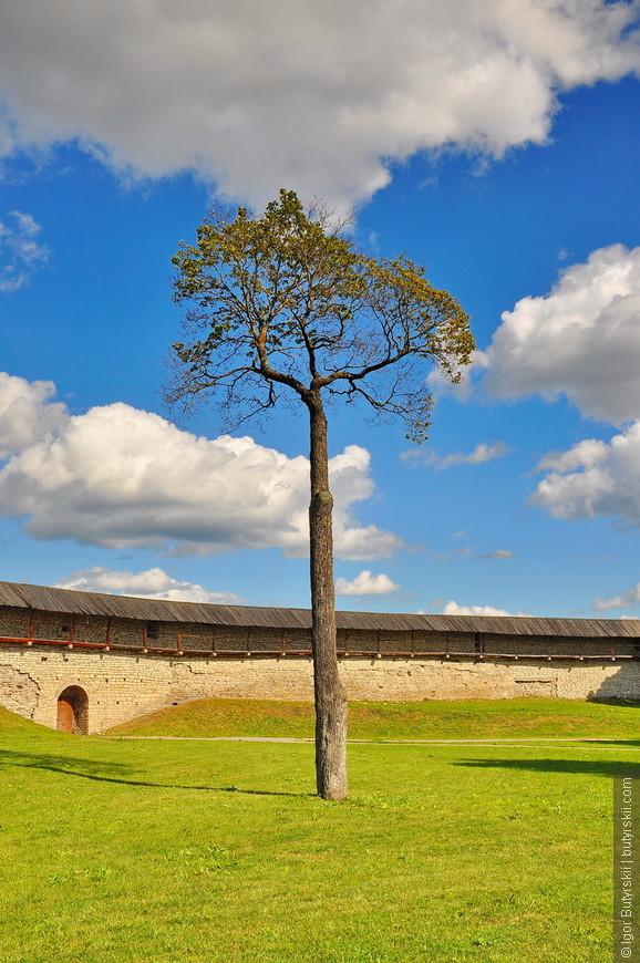 22. Какое здоровское дерево, очень интересное.