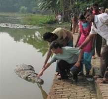 Паломники до смерти закормили столетнего «священного» крокодила в одном из храмов Бангладеш