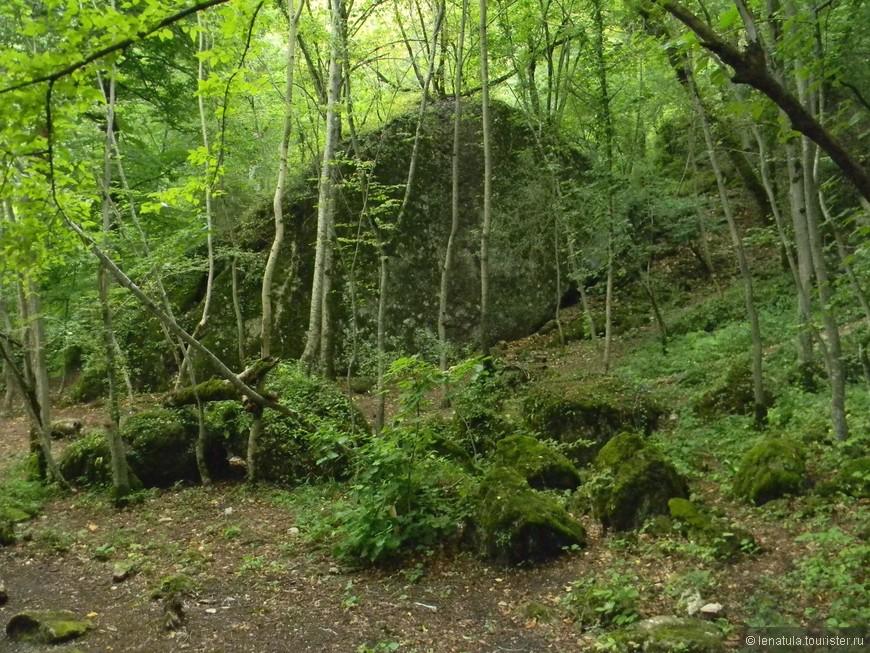 Зелёные даже камни в лесу, мох на деревьях и камнях такого яркого сочного цвета, что диву даёшься!