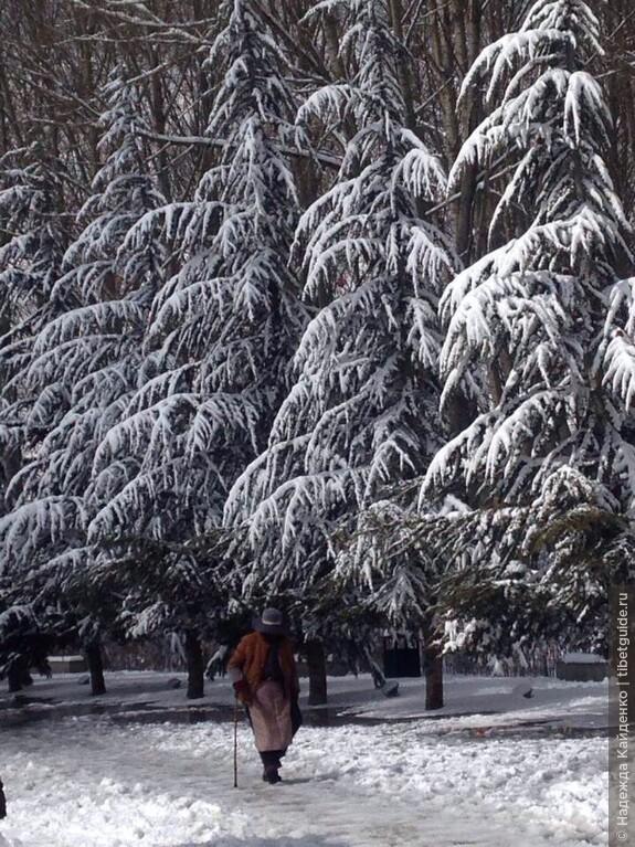 В парке, пейзаж напомнил мне Россию.. это в Тибете мы радуемся такому снегу, а в России почти по полгода хочешь-не-хочешь на такую красоту любуйся )
