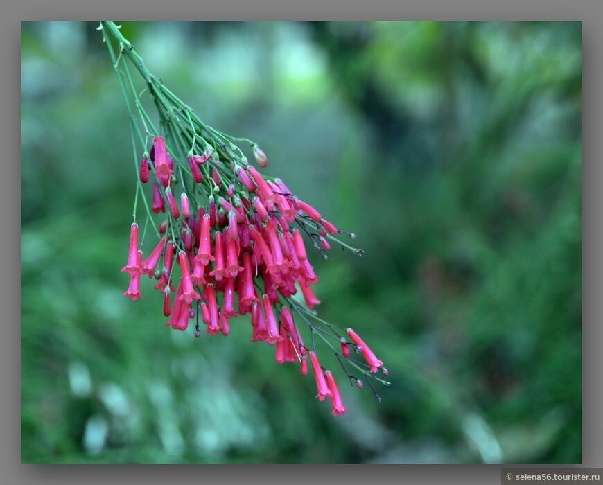 Остров - ухоженный тропический парк с удивительными цветами.