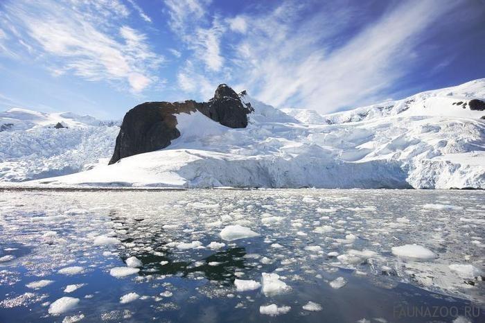 Животные-Антарктиды.jpg