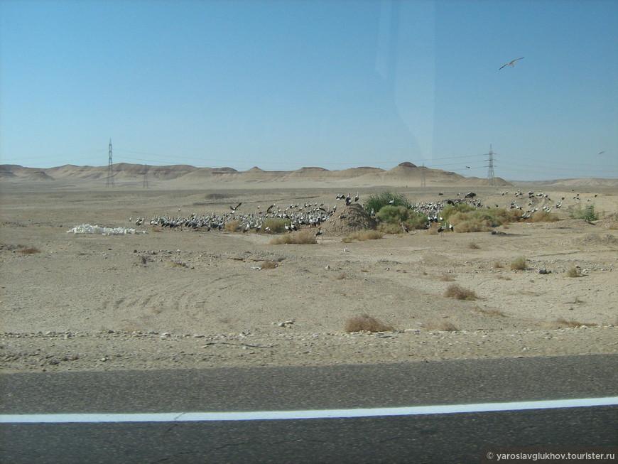 Непонятные птицы, которые встретились нам по пути из Хургады в Луксор.