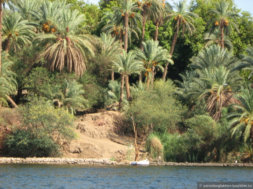 Финиковые пальмы на берегу Нила.