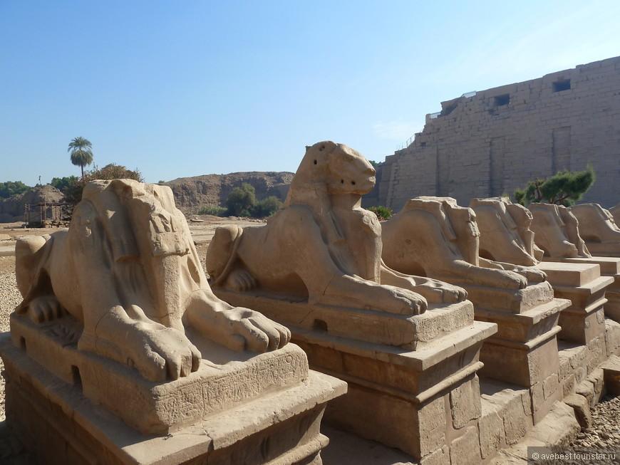 Строиться Карнакский храм начал примерно в 20 в. до нашей эры. И каждый фараон после этого так или иначе достраивал часть храма. В общей сложности на строительство комплекса ушло 13 столетий. Карнак состоит из 33 храмов и залов. По сути, это музей под открытым небом. У входа в Карнакский храм располагается аллея бараноголовых сфинксов