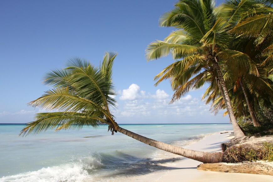 На протяжении минут двадцати мы шли по живописному берегу в полном одиночестве. Это место мне понравилось, поскольку пальмовый лес здесь дикий. Мне приспичило зайти в него на пару минут. Так вот там все усеяно засохшими листьями, старыми и свежими кокосами. Я даже вынужден был закрывать обеими ладонями голову, чтобы не быть убитым одним из них.