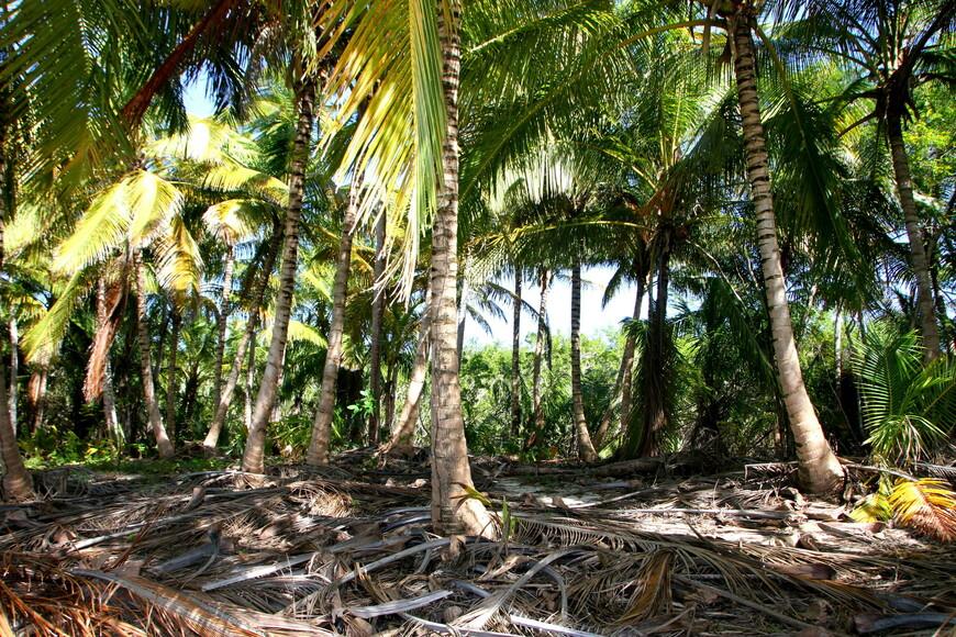 Я сделал много пальмово-морских снимков. Но решил не утомлять ими вас. Поэтому выкладываю побольше кадров с людьми.  Даже находясь рядом, я все равно шел мимо и по-доброму завидовал им.