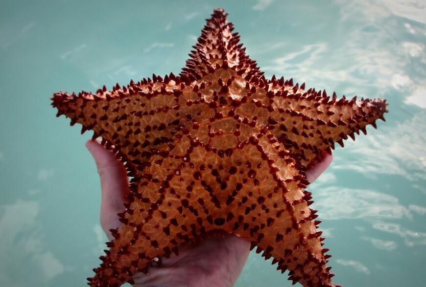 Доставать их из воды надолго нельзя, вообще нежелательно. Но народ сами знаете какой, ради экзотических снимков особо об этом не задумывается.