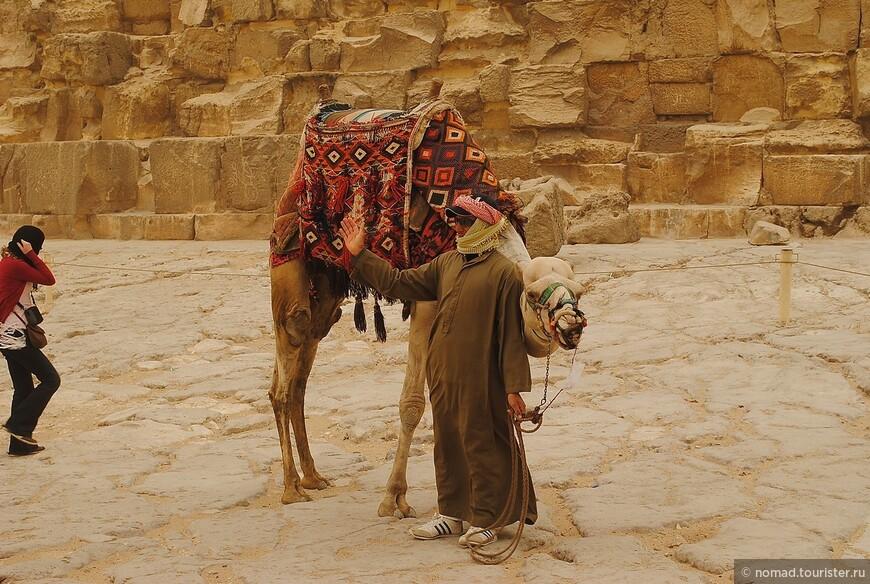 Верблюжьи покатушки