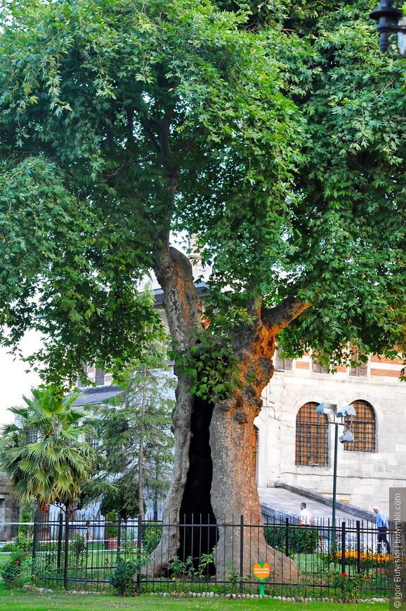 03. Дырявое дерево, не знаю как называется, но наверно тоже очень символичное.