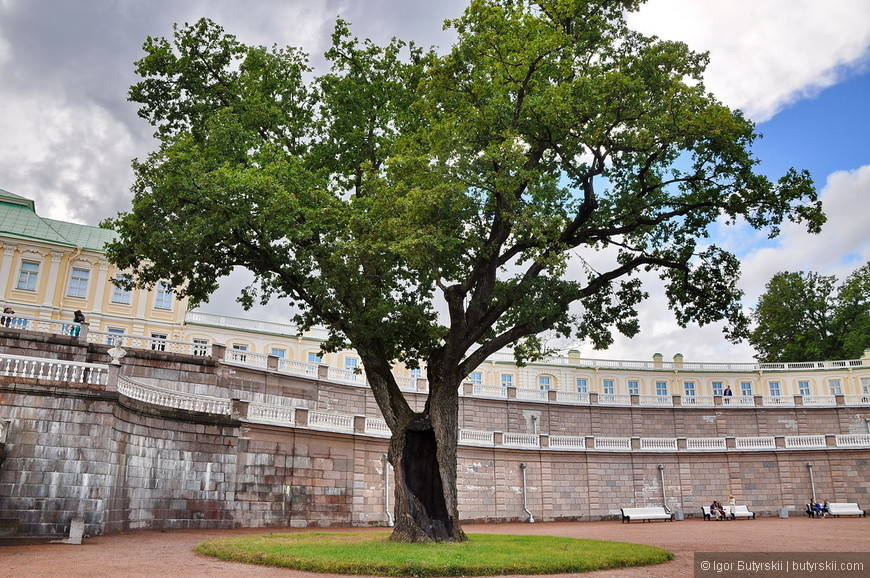 07. Я так и не понял, как живет это дерево с дырой, может там какая легенда про него есть?