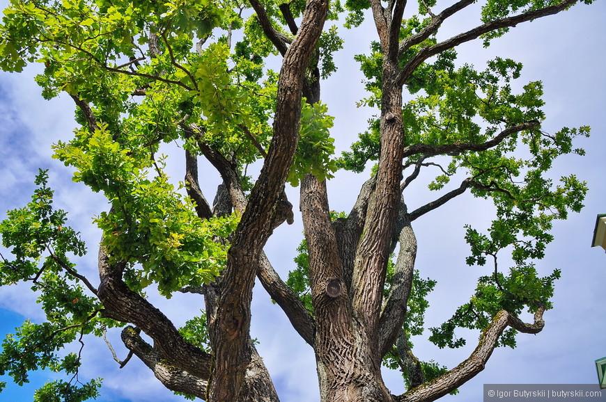 24. В хороший солнечный день, даже деревья смотрятся как то иначе.