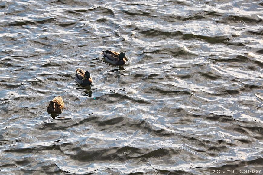 08. В пруду плавают утки. Я посещал город поздней осенью и было уже довольно прохладно.