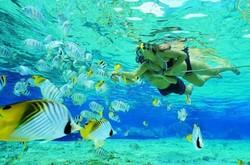 В Абу-Даби туристов повезут на подводное сафари