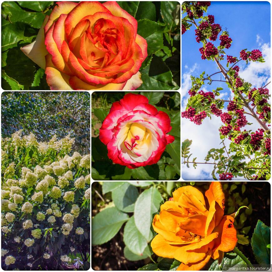 в монастыре богатейшие клумбы с самыми разными сортами цветов