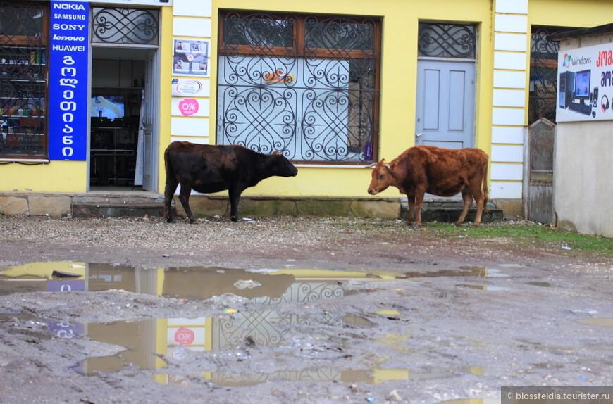 Городок Мартвили небольшой. По улицам ходят коровки, бегают свиньи...