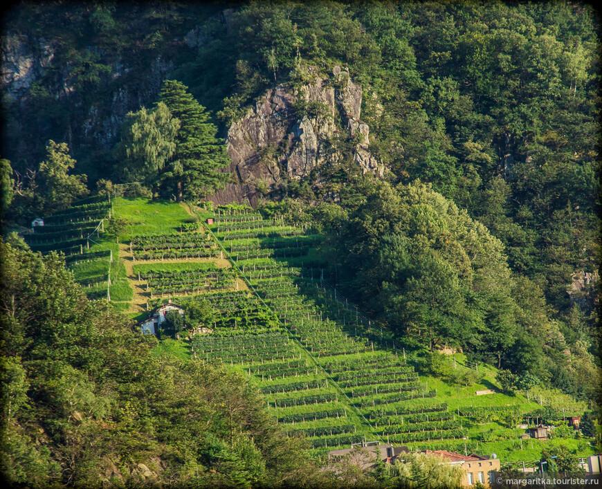 вид со стен замка на виноградники на вотчном склоне