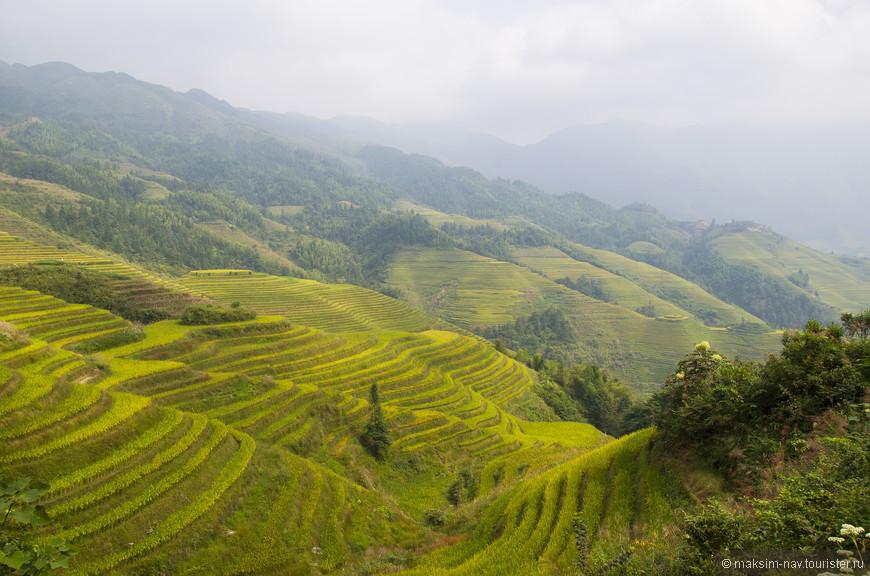 Террасы Лонгджи состоят из двух больших ареалов: JinKeng и PingAn. Мы проживали в деревне Тейтиан, расположенной в ареале Джинкен, а в Пингань в один из дней сходили пешком.