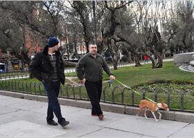 Мадрид: люди и собаки