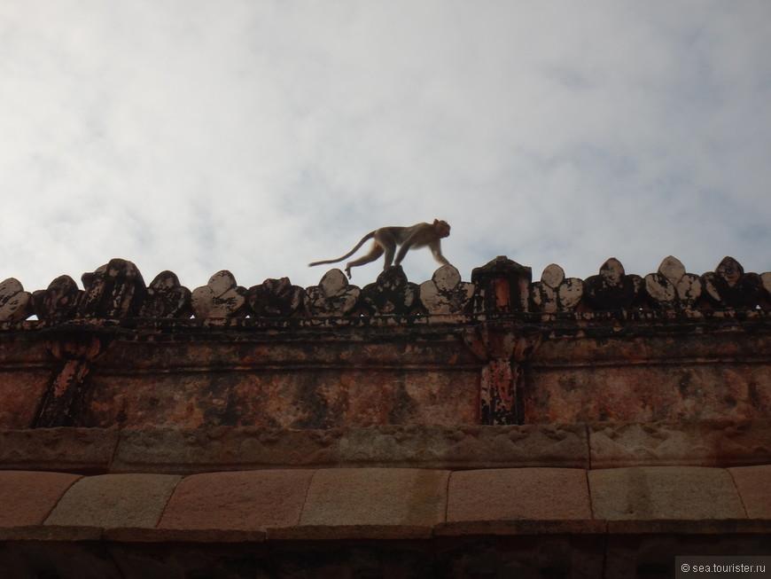 обезьянки - главные хранительницы храма, они здесь самые разные