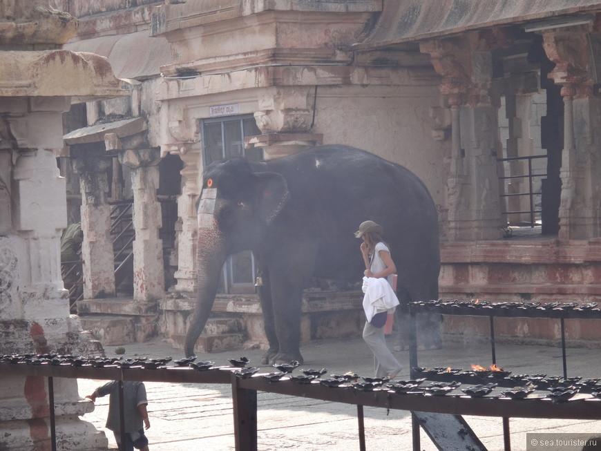 священный слон, позже заметили таблички с просьбой: не фотографировать слона! Но и как можно удержаться!