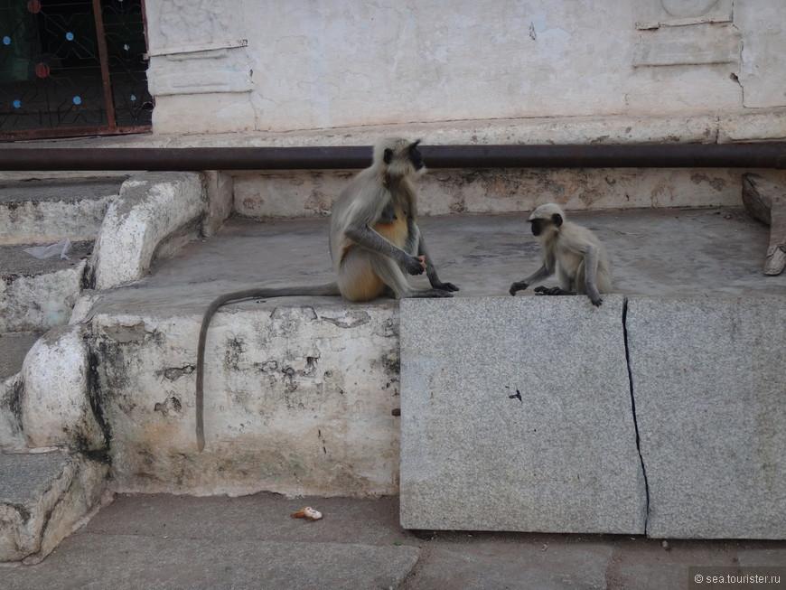 обезьяна мама и малыш