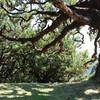 реликтовые леса Мадейры