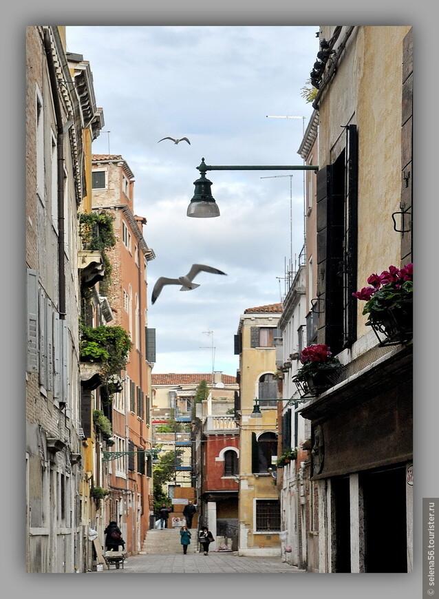 Чайки на улицах - признак  приморского города .