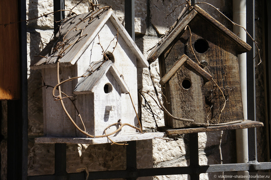 ...как, например, эти скворечники.  Даже птенцы у них имеют отдельную жилплощадь.