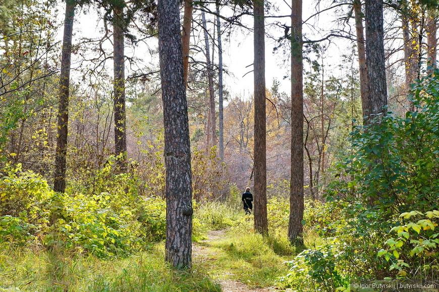 01. Если зайти в парк со стороны стадиона, то такое чувство, что попал в тайгу, лес очень плотный.
