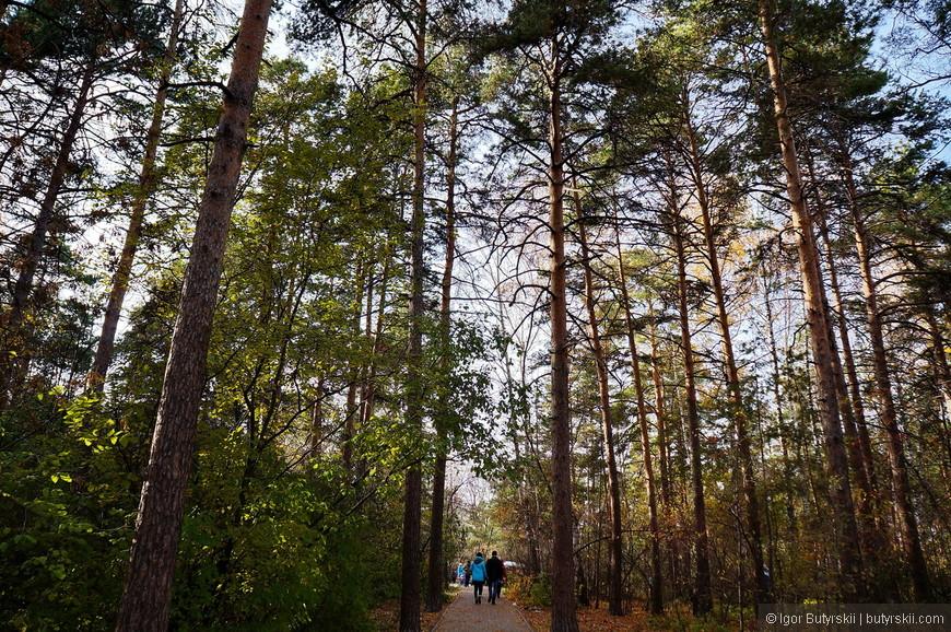 02. Дорожки проложены по лесной чаще к парку, даже в солнечный день довольно темно.