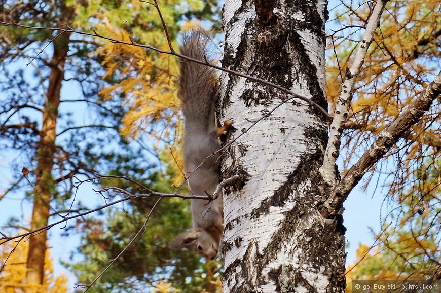11. В парке очень много белок, они носятся по деревьям, и не стесняются брать еду из рук отдыхающих.