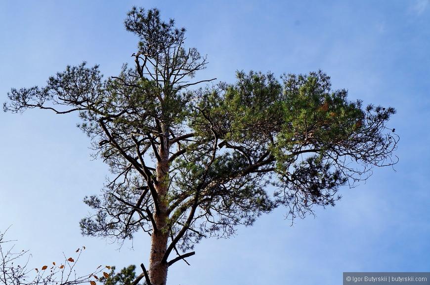 17. Интересные деревья, вообще в парке довольно высокие деревья для таких мест.