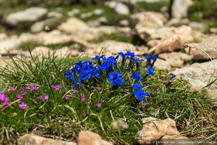 Альпийские травки все меньше