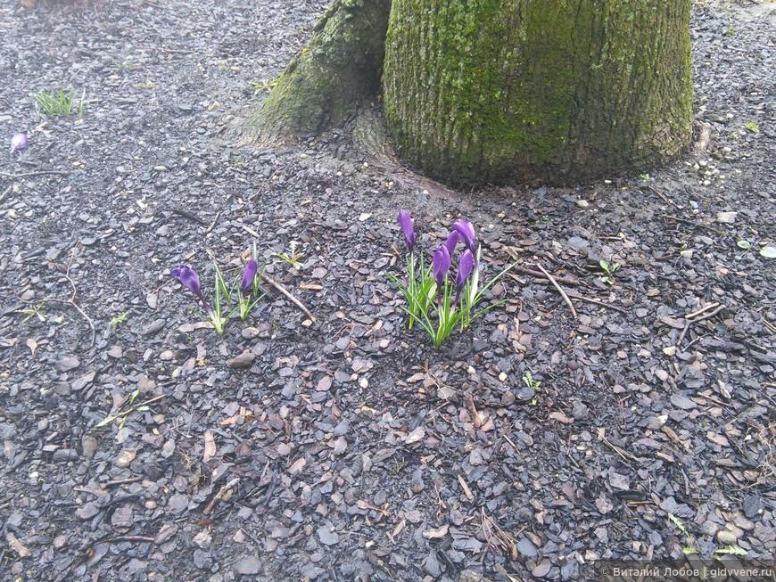 Время года - весна!